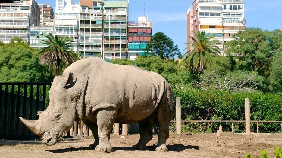 Cierre del zoológico de Buenos Aires- animales en cautiverio