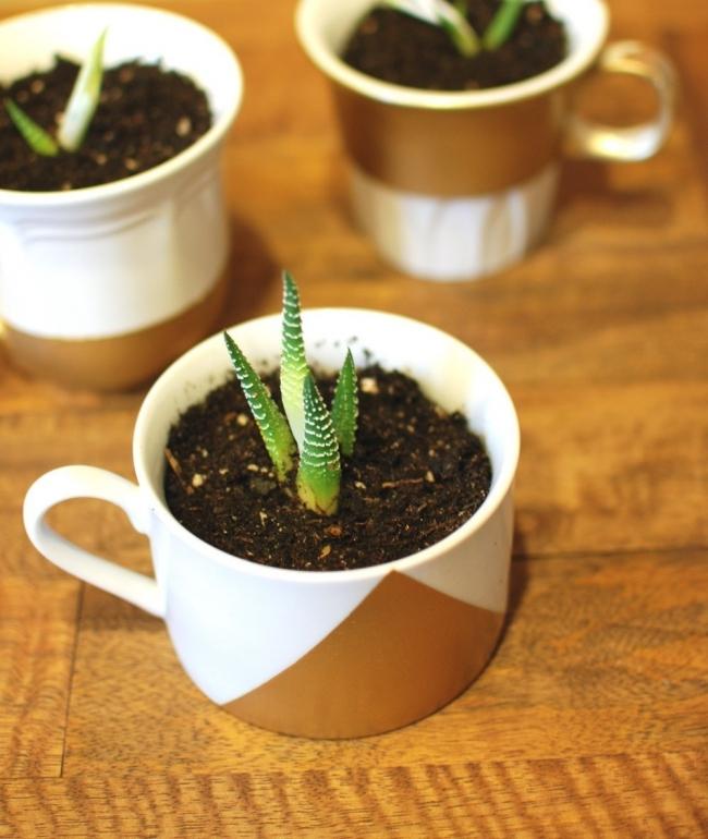 Ideas para casas sin jardín- plantas en tazas