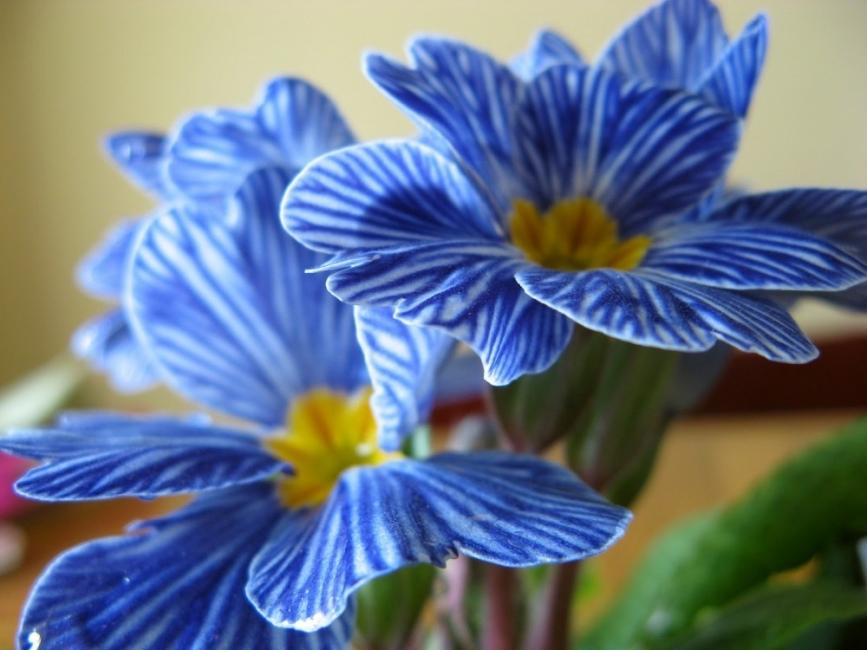 Las 15 Flores Mas Exoticas Del Mundo