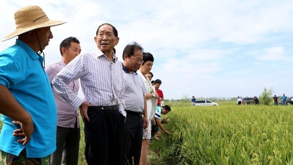 El proyecto fue desarrollado por el Centro de Investigación y Desarrollo de Arroz del Mar de Qingdao