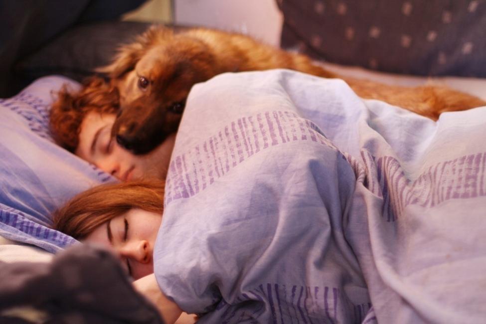 Dormir con mascotas - pareja