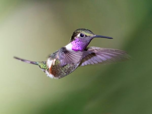 8589130437141-beautiful-hummingbirds-wallpaper-hd