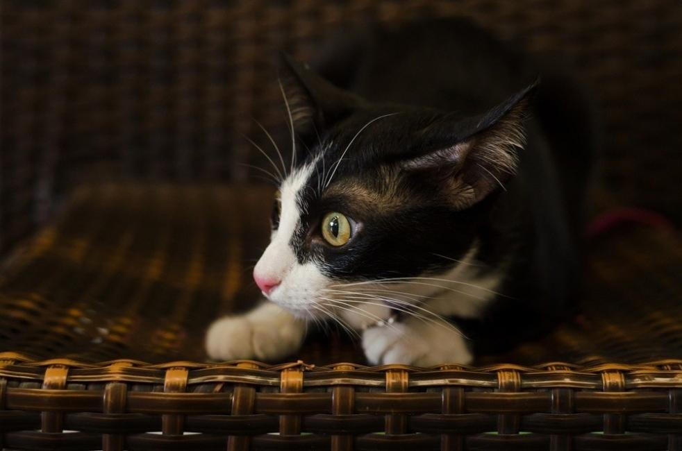 lenguaje corporal gato