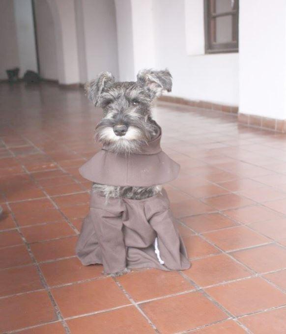 perro monje