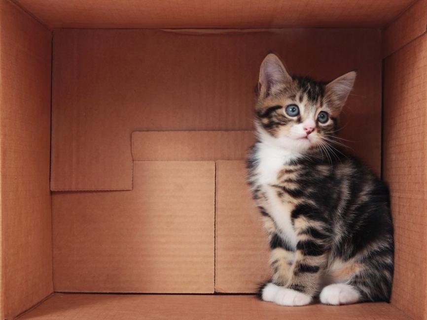 Comedero para gatos