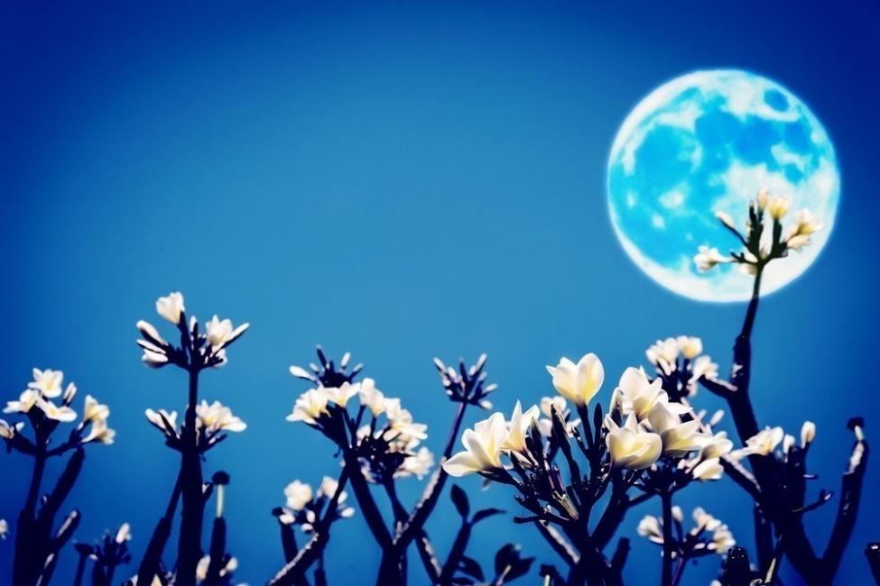 luna de las flores