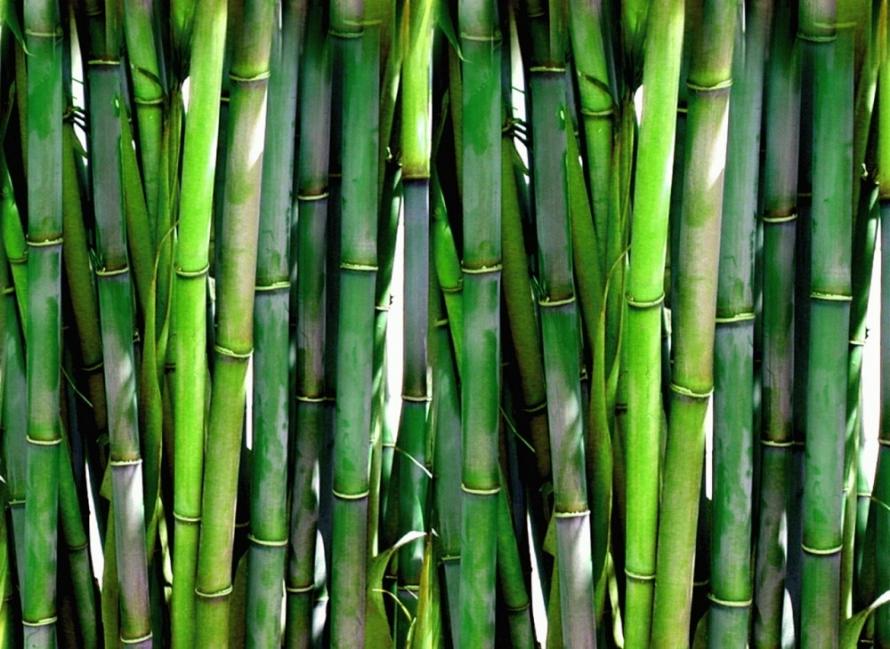 15 Ideas Para Decorar Con Bambú Bioguia