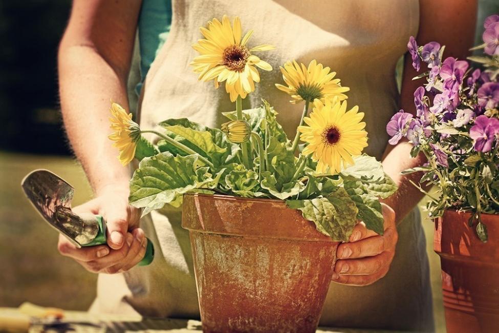 Flores y personalidad- girasol