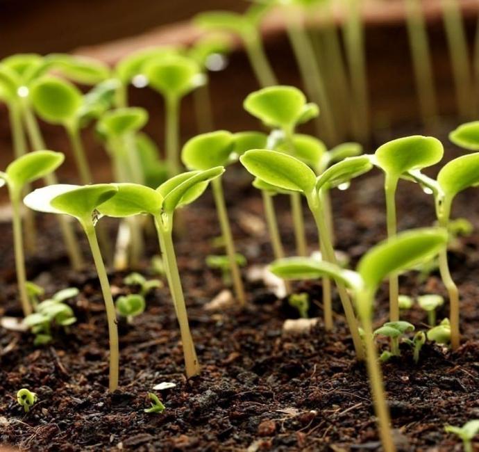 agua oxigenada jardin- fertilizante