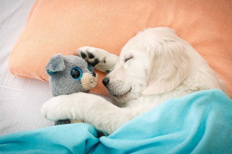 Dormir con mascotas - muñequito