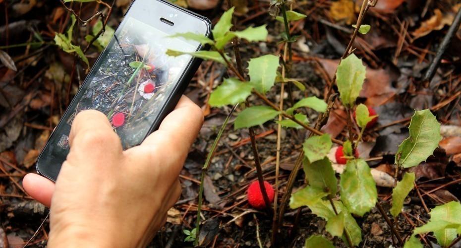 Aplicaciones ecologistas - Pl@ntnet