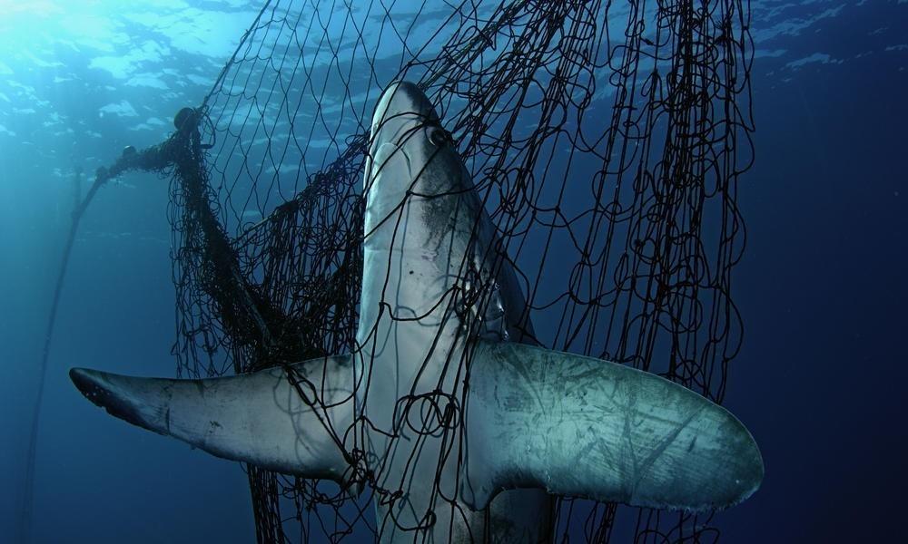 Leonardo Di Caprio alzó su voz en contra de la pesca
