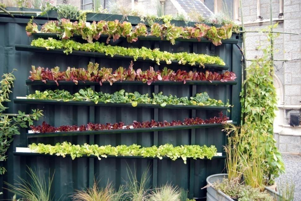 jardín vertical - puentes de chapa