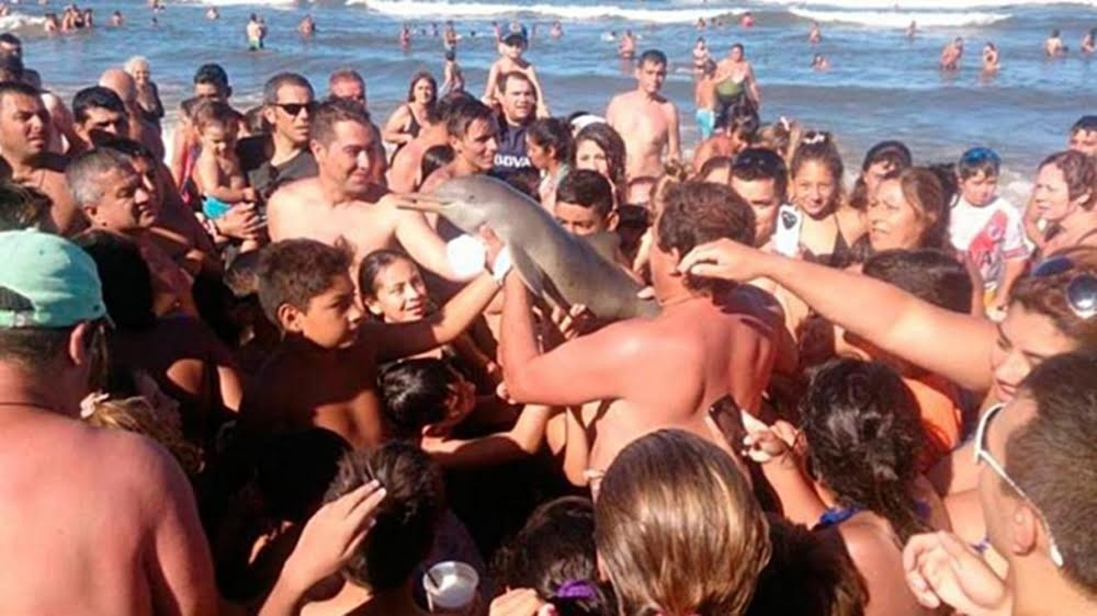 Delfín que murió luego de ser fotografiado
