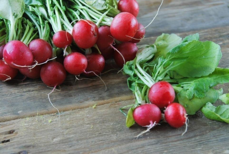 cultivar en botes de pintura -rábanos