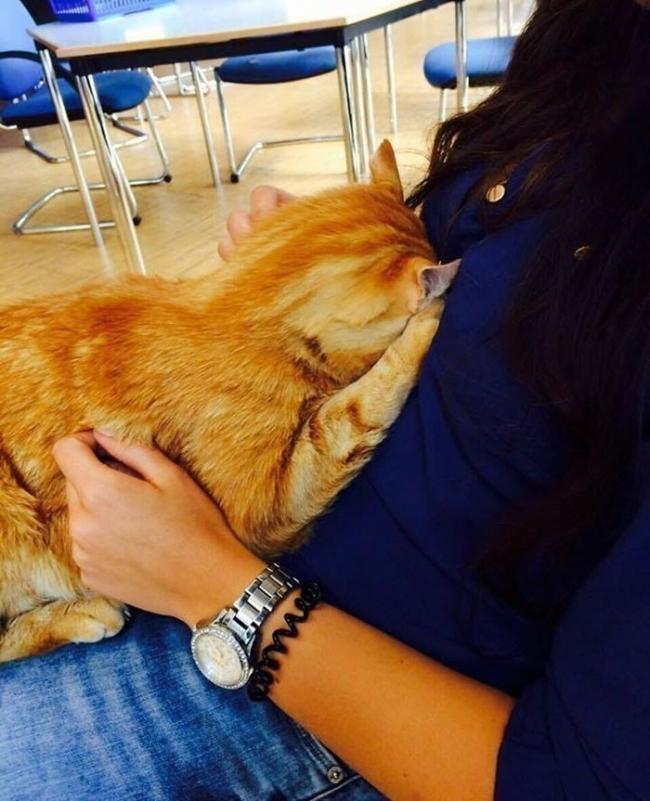 gato universidad alemana- alumnos- estrés