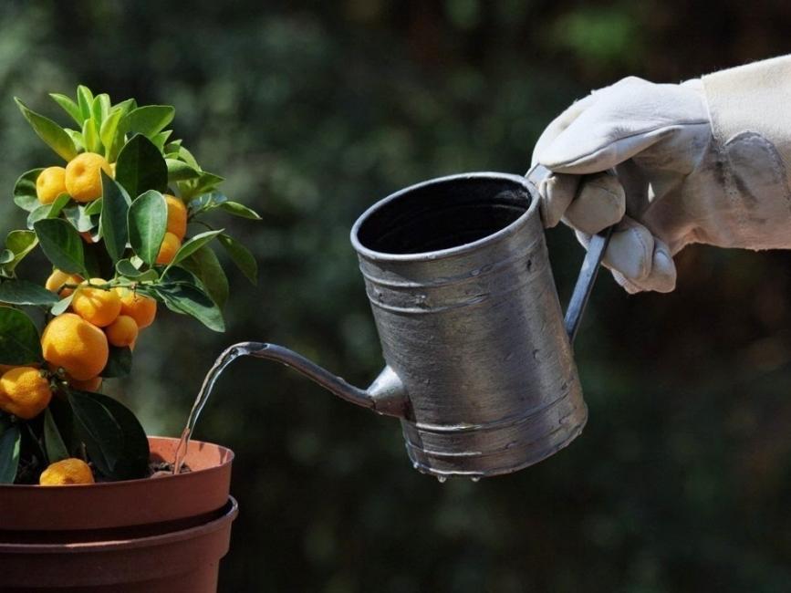 Mantener húmedas tus plantas durante las vacaciones - regar