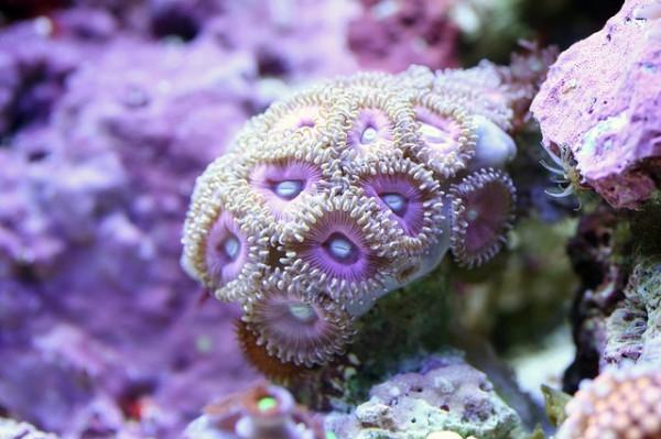 Macro-Shots-of-Underwater-Corals-10-600x399