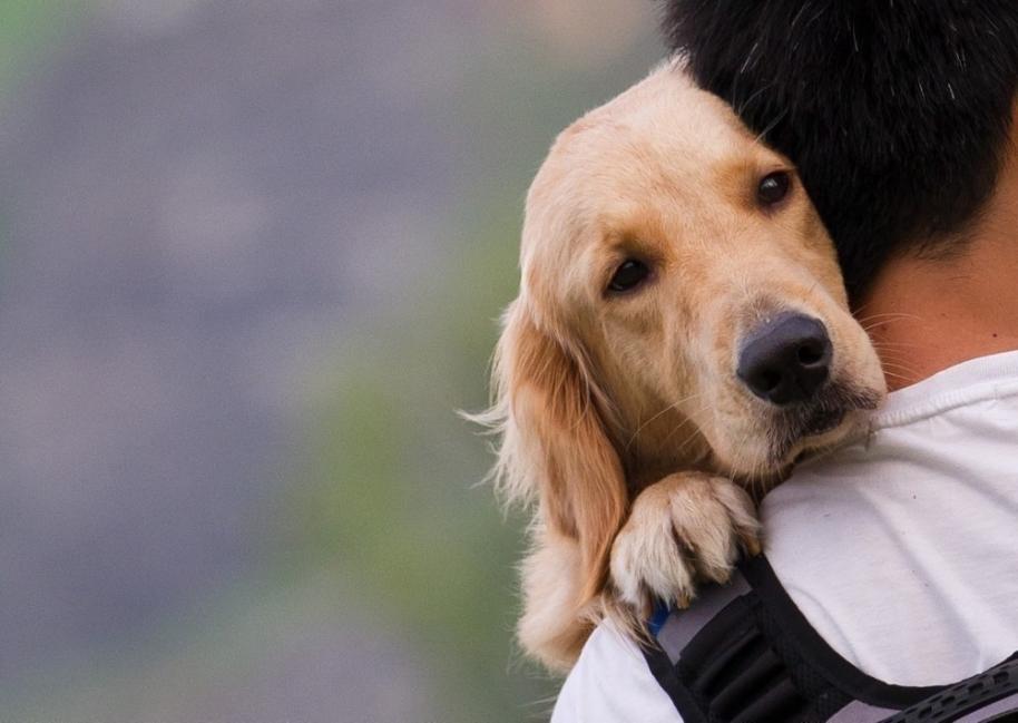 cuidar mascotas pirotecnia