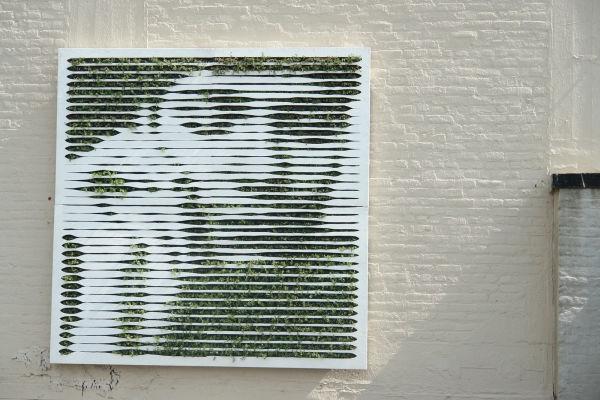 mosstika_green-wall1