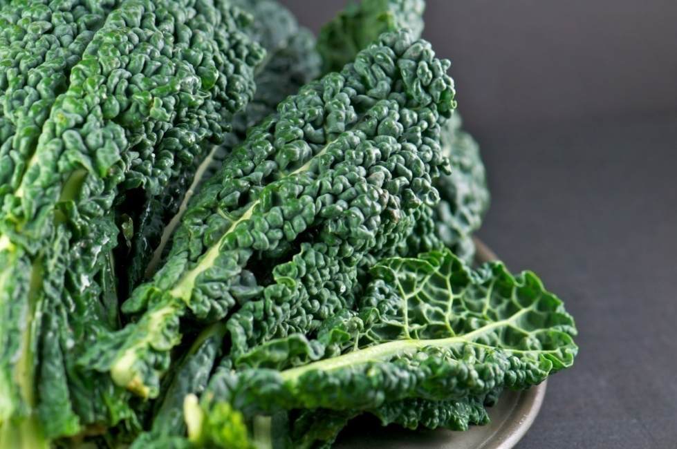 cultivar en botes de pintura - Kale