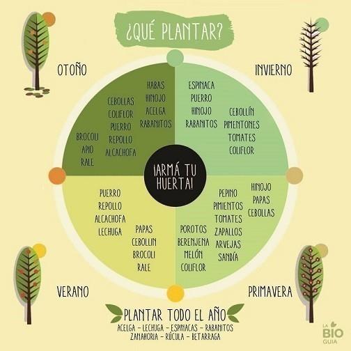 qué plantar en cada momento