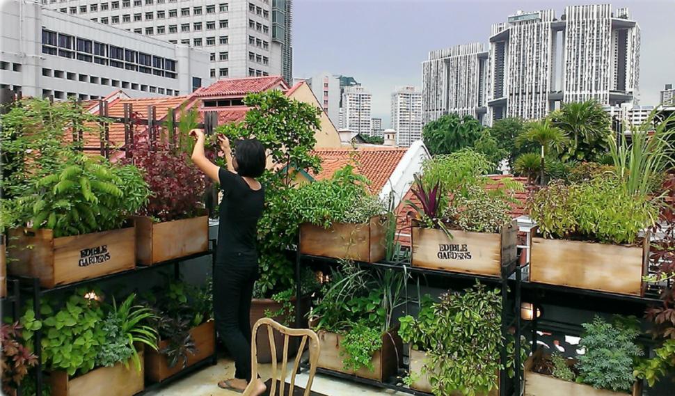 jardín comestible- espacio reducido