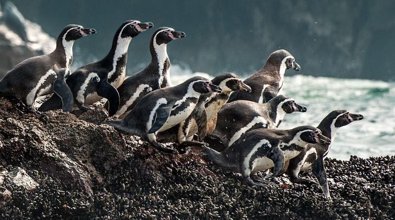 Dinstintas ONGs se unieron a los ciudadanos para salvar a los pinguinos.
