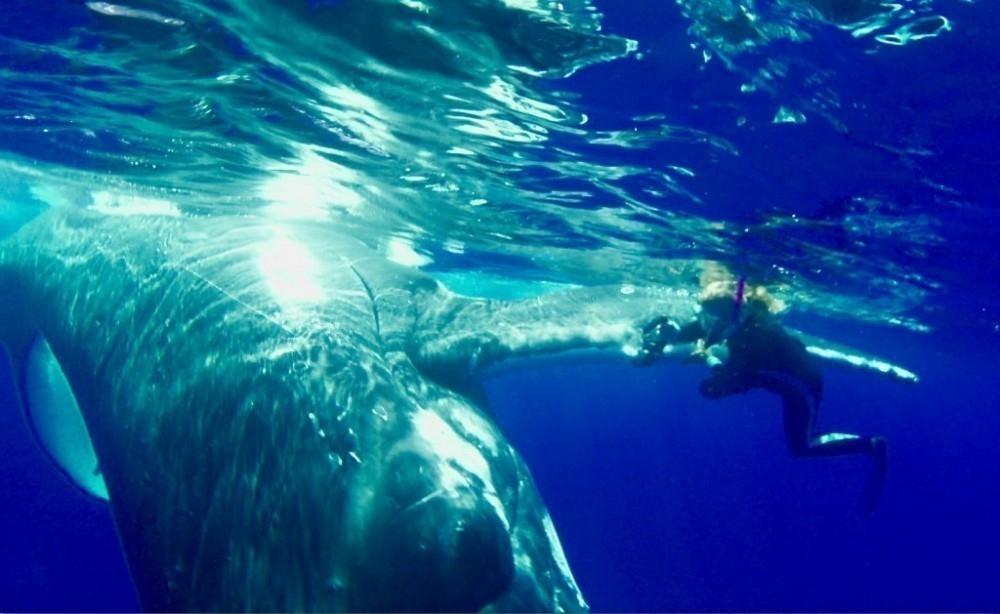 Nan fue elevada hacia la superficie del mar por una ballena de 20 toneladas para salvarla del ataque de un tiburón tigre