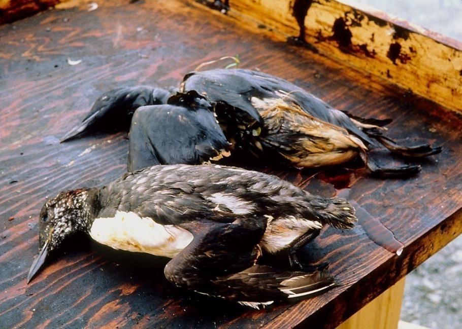 El derrame de Exxon Valdez, uno de los más graves de la historia