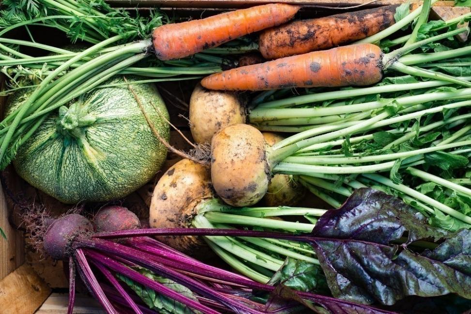 ONU las cosechas ecológicas son la mejor forma de alimentar al mundo