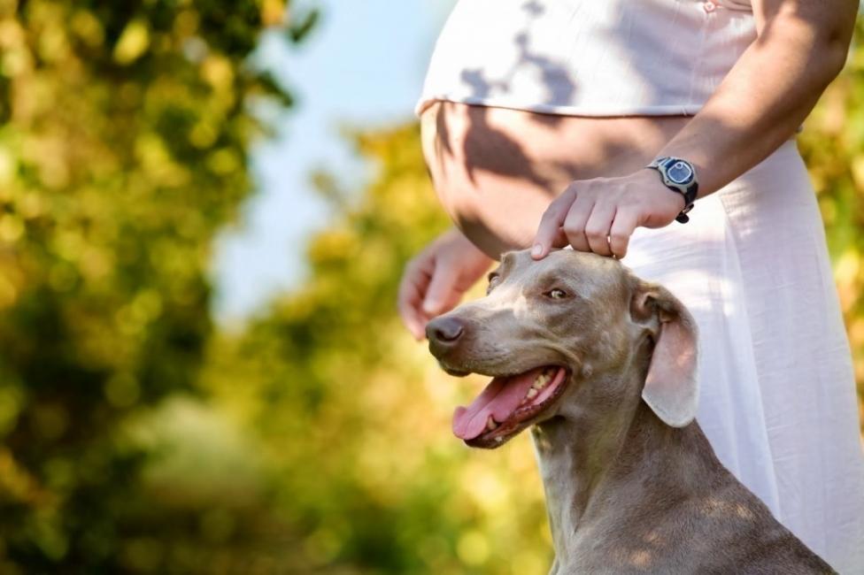 beneficios de tener un perro durante el embarazo- ejercicio