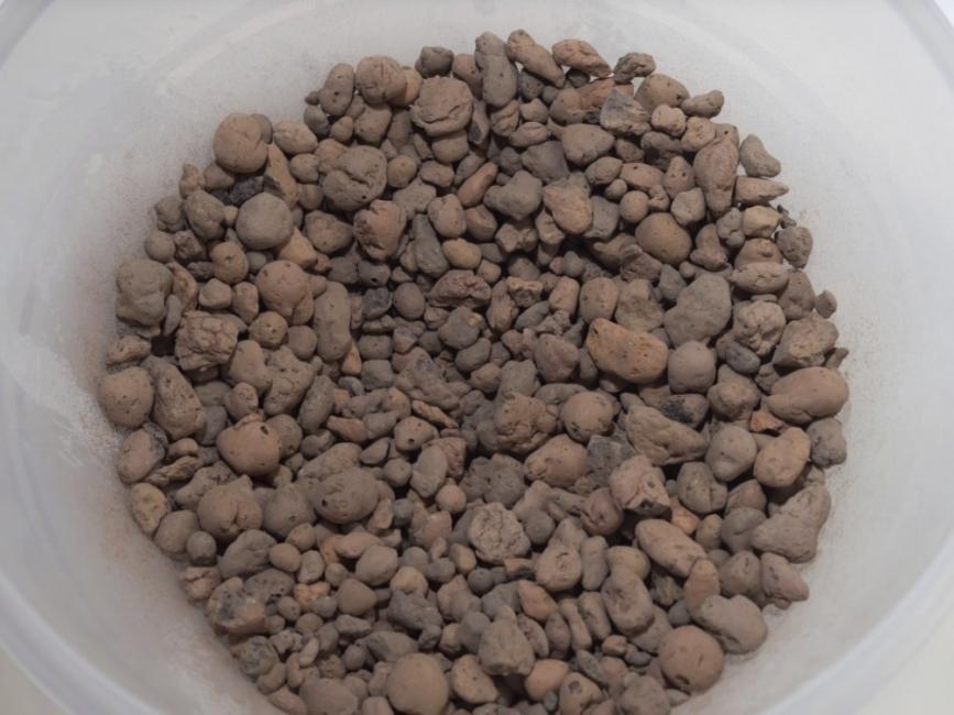 cultivar mango en macetas - preparar contenedor