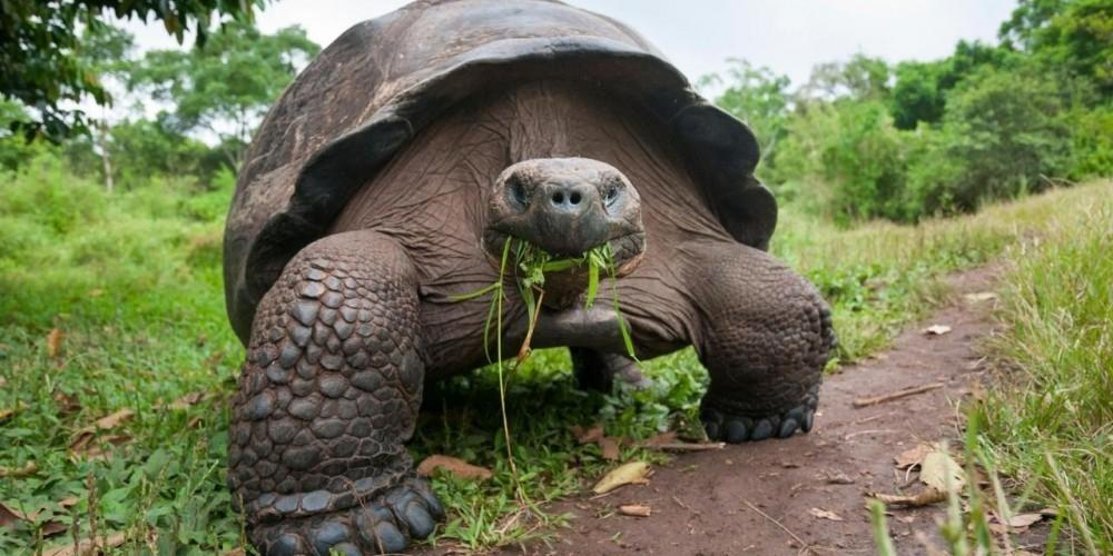 galápagos tortugas