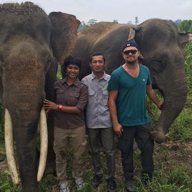 Leonardo DiCaprio orangutanes elefantes -Sumatra