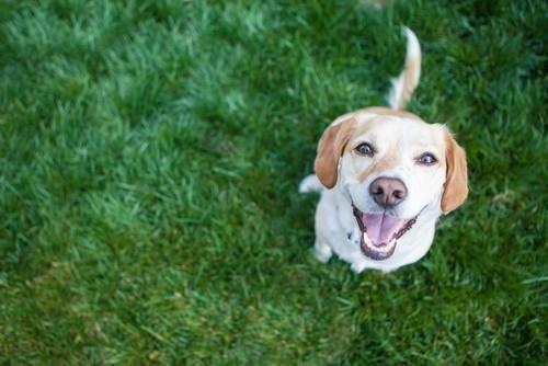 Los perros entrenados pueden distinguir entre los aromas de gemelos idénticos del mismo entorno