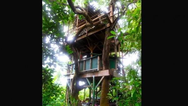 varios-metros-troncos-arboles-vigas_TINIMA20121116_0353_3