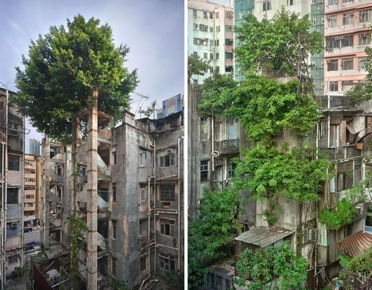 Árboles Hong Kong
