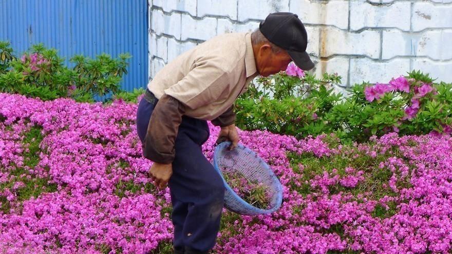 hombre plantó flores para su esposa ciega -