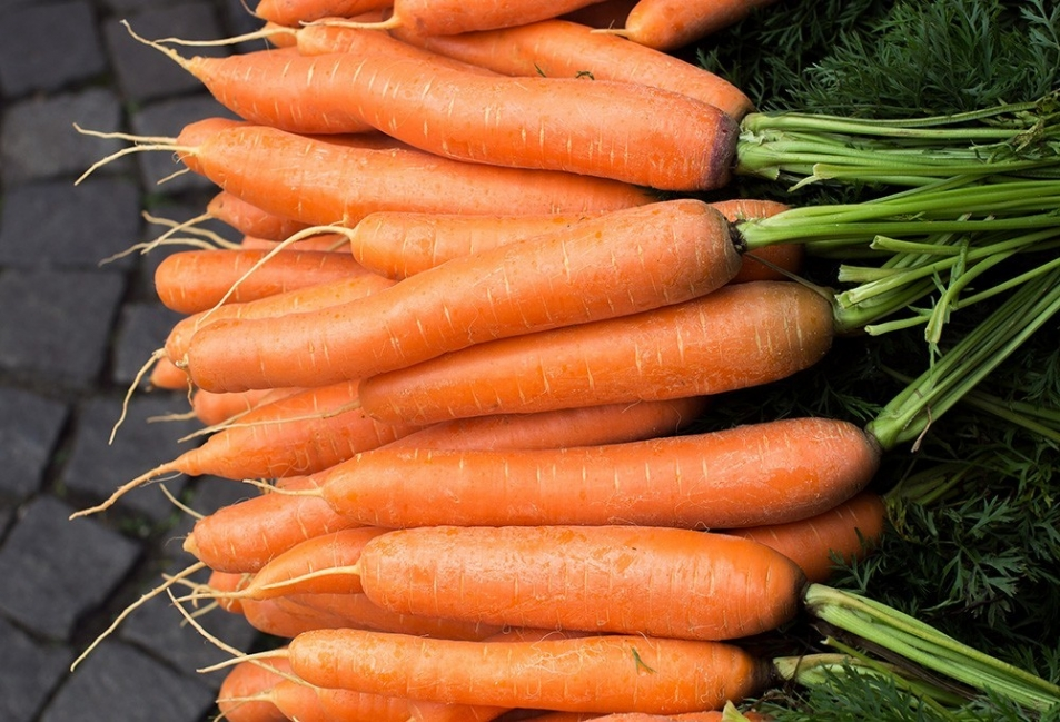 Vegetales y hierbas que puedes tener para siempre - zanahoria