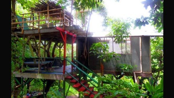 Hawai-casas-arbol-comunican_TINIMA20121116_0352_3