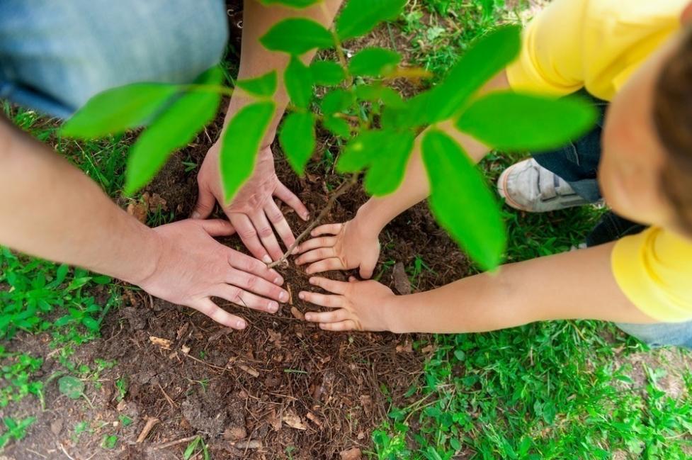 árboles plantar