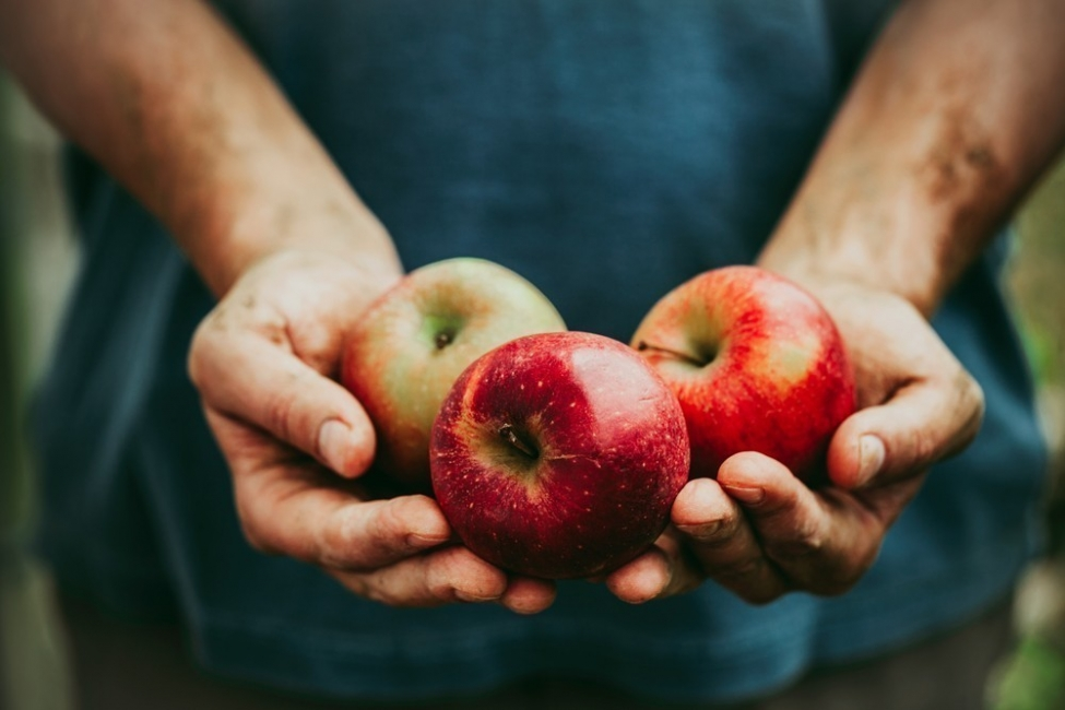 manzana - orgánica