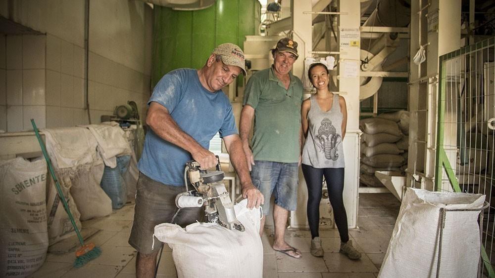 arroz orgánico - Brasil