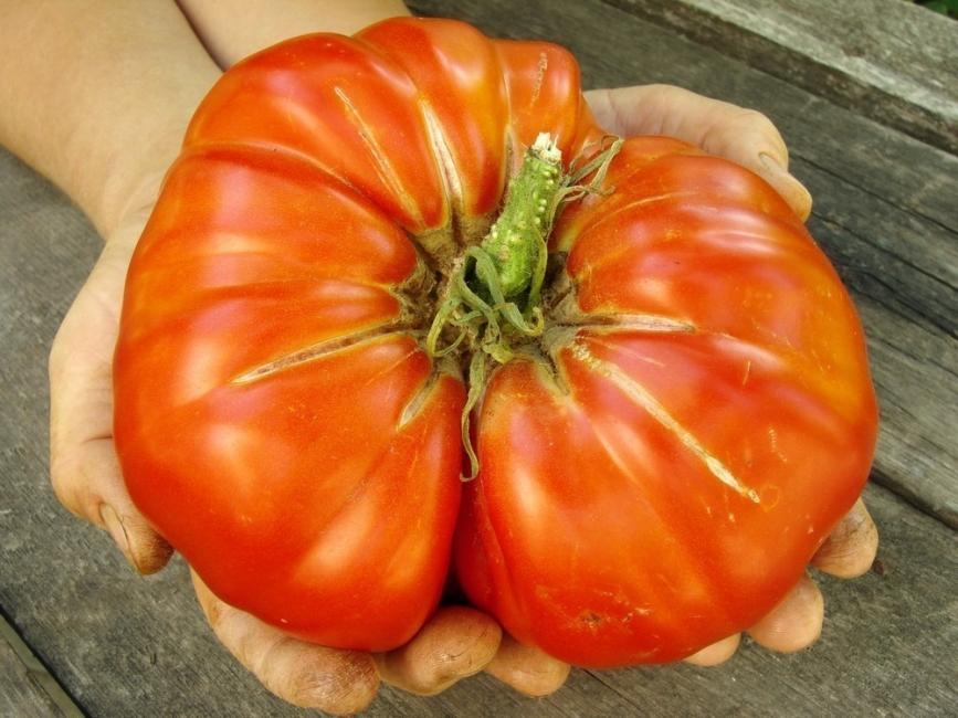 10 misterios que la ciencia nunca pudo resolver - genes del tomate