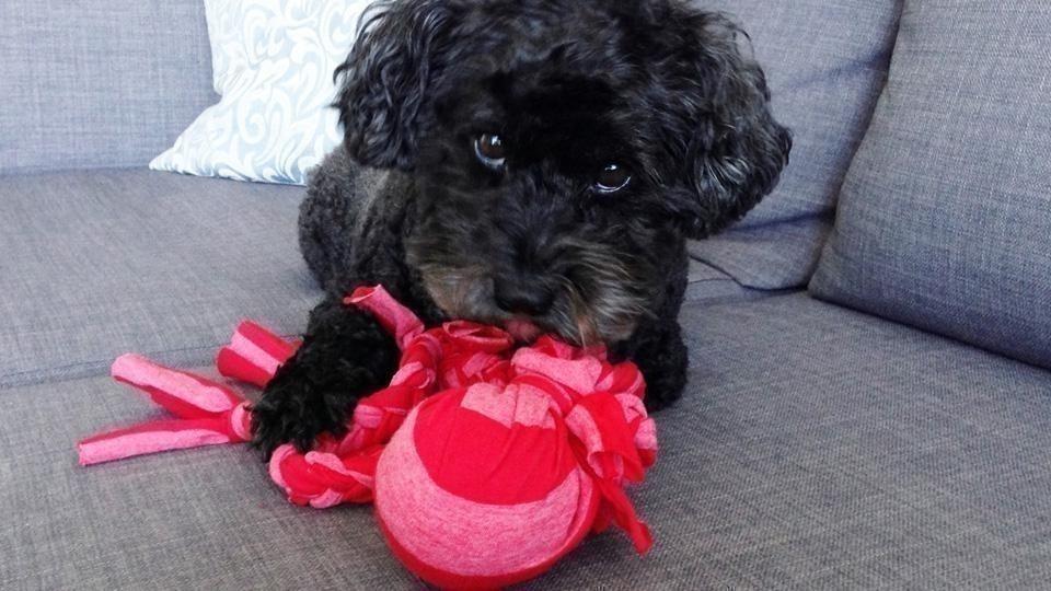 Ideas para hacer con una vieja remera - juguete para la mascota