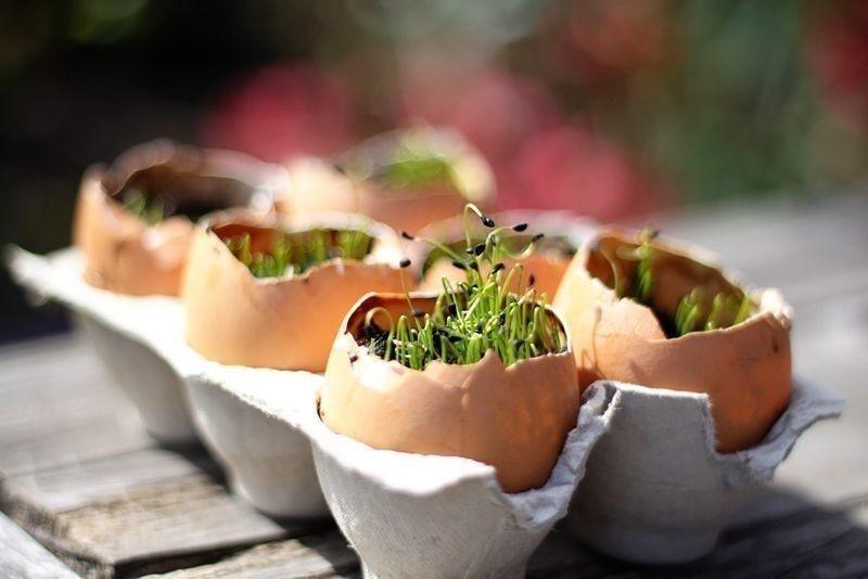 semilleros- trucos de jardinería