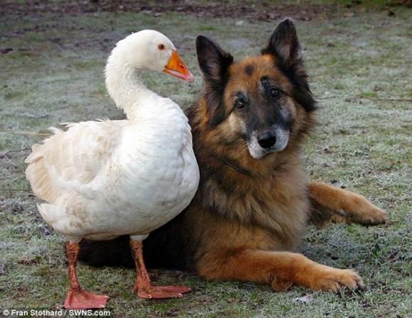 perro-y-ganso-1-580x448