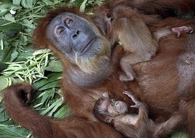 madre mono