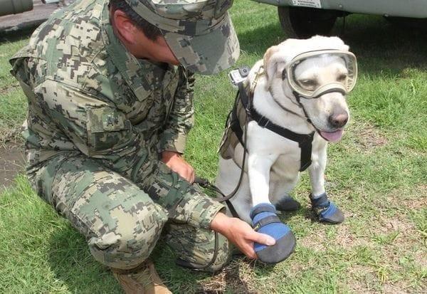Frida cuenta con un equipo especial para ejecutar rescates